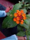 cellulare piacevole rosso di cameta della mano del fiore Fotografia Stock