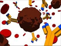 Cellule cancéreuse et anticorps Images libres de droits