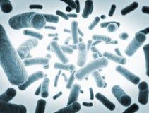 Cellule dei batteri sotto il microscopio Fotografia Stock Libera da Diritti