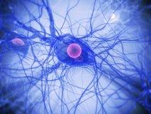 Cellule nerveuse Photos libres de droits