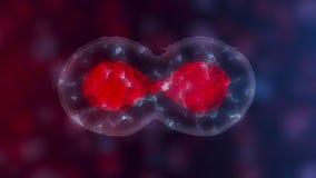 Cellule staminali o crescita embrionale, riabilitazione e trattamento delle malattie, illustrazioni 3D illustrazione di stock