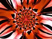 Cellules 5 de chéri Photo libre de droits