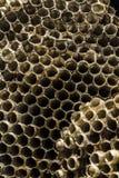 Cellules abandonnées de ruche de guêpe Photographie stock libre de droits
