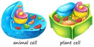 Cellules d'animal et végétal Photos libres de droits