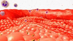 Cellules de corps Photo stock
