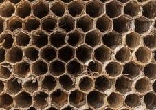 Cellules de ` de guêpes images libres de droits