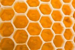Cellules de miel Photo stock
