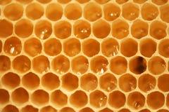Cellules de miel Image stock