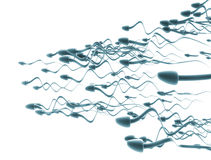 Cellules de sperme Image stock