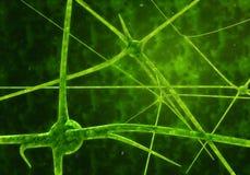 Cellules de synapse et de neurone envoyant les signaux chimiques électriques illustration stock