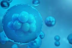 cellules humaines ou animales du rendu 3D sur le fond bleu Concept scientifique de médecine d'embryon de partie de concept, cellu Photos stock