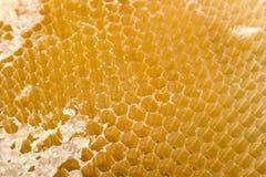 Cellules pour le miel Photographie stock libre de droits