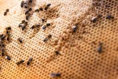 Cellules vides de perspective de nid d'abeilles Photographie stock