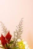 Celosia Fotografia de Stock