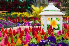 Celosia plumosa Blume Lizenzfreie Stockfotos