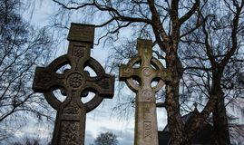 Celtic cross gravestones and tree branch silhouette Royalty Free Stock Photo