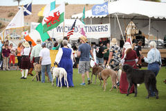 Celtic Dog Parade Stock Images