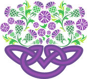 Celtic knot in the form of a basket with flowers thistle Royalty Free Stock Photography