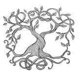 Celtic Tree of Life. Illustration of Yggdrasil Stock Photo