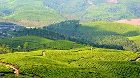 Celui avec plus de jardins de thé Image libre de droits