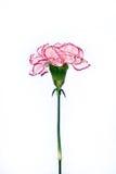 Celui pour l'amour. Image libre de droits