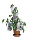 Cem árvores do euro Imagens de Stock Royalty Free