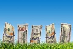 Cem cédulas do dólar que crescem da grama verde Dinheiro Imagem de Stock Royalty Free