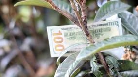 Cem notas de dólar na árvore video estoque