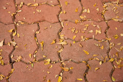 Cement block flooring filled with dry leaves Stock Image