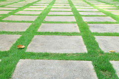 Cement block walking way on the grass Stock Image