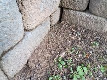 Cement blocks with small frog. Grey cement cinder blocks with small frog in the dirt Royalty Free Stock Photography