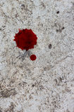 Cement floor with a drop of blood. Stock Images