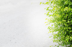 Cement gray background with green leaves Royalty Free Stock Photos