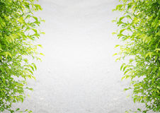 Cement gray background with green leaves Stock Photo