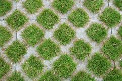 Cement with green grass squares Royalty Free Stock Photo