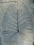 Cement Leaf. Leaf permanently imprinted onto cement Stock Image