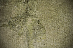 Cement moss texture background. Pattern Royalty Free Stock Images