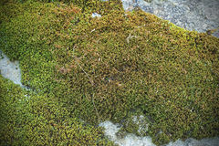 Cement moss texture background. Pattern Stock Images