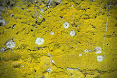 Cement moss texture background. With white stains Royalty Free Stock Photography