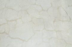 Cement- och betongväggbakgrundstextur royaltyfri bild