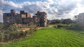 Cement och gräsplan Arkivfoton