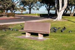 Cement Park Bench at Chula Vista Bayfront Park. Cement park bench with pigeons in the Chula Vista Bayfront park Royalty Free Stock Photography