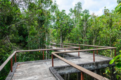 Cement pathway through the forest Royalty Free Stock Photos