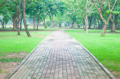 Cement road in garden Royalty Free Stock Photo