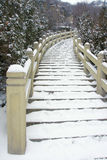Cement stairs. The cement stairs cover with snow Royalty Free Stock Image