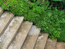 Cement stairs in a park surrounded by tropical plants and flower stock image