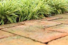 Cement tile corridors in a garden at the park Royalty Free Stock Photos