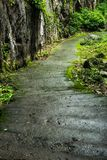 Cement walkway in forest on mountain. Cement walkway in forest on mountain In the rainy season,Chiangrai Thailand Stock Photography