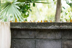 Cement wall with broken glass. Old style security fence wall with broken glass cover on the top Stock Photos