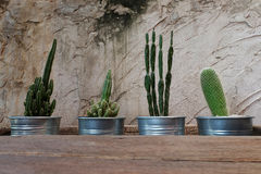 Cement wall decorative with cactus and rough wooden table. Have some space for write wording. Background Stock Photo